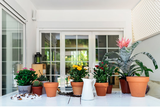 Amazing home with collection of pot plants