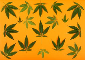 Cannabis Leaves on Light Orange