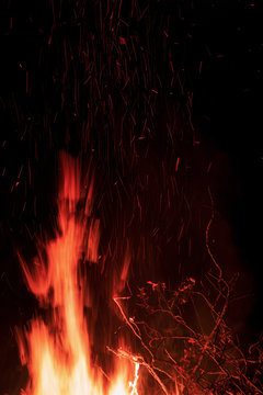 Branches burning in the fire