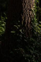 Italian forest