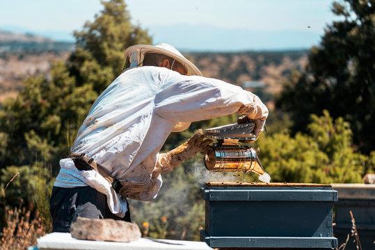 Beekeeper smoking beehive with bee smoker