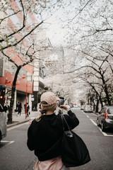 Japan, Tokio, Chidorigafuchi Park, cherry blossom on Sakura Road