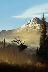 Elk standing in grassy field