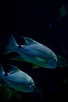 Marine Creature - Exotic Fishes