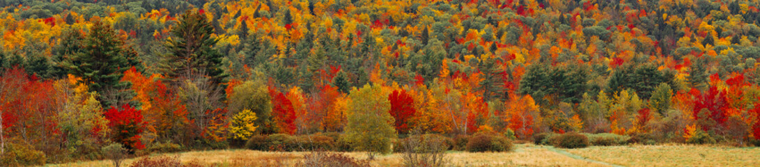 super wide crop of a hill in Vermont during Fall season