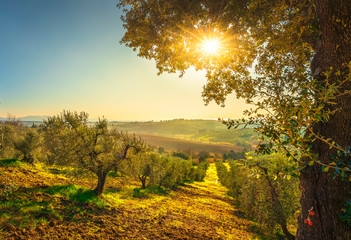 Fotobehang Olijfboom Maremma countryside panorama and olive trees on sunset. Casale Marittimo, Pisa, Tuscany Italy