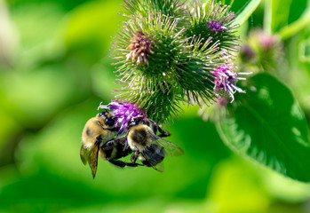Bees on a flower in garden