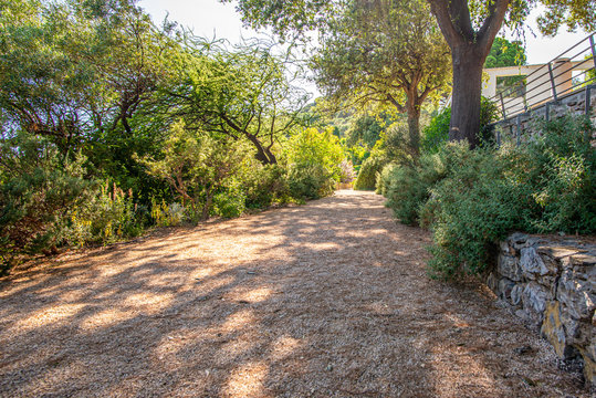 Rectilinear footpath covered with gravel in a Mediterranean garden, Provence, France