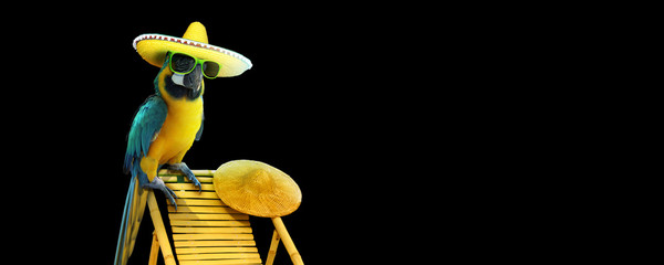 La pose en embrasure Perroquets Papagei im Urlaub am Strand