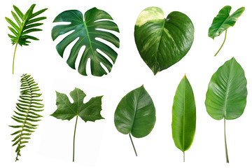 Set of tropical green leaves isolated on white background. Wall mural