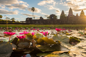 Beautiful pink water lily blooming in the pond in front of Angkor Wat one of the UNESCO world heritage site in Siem Reap, Cambodia during sunrise.  Wall mural