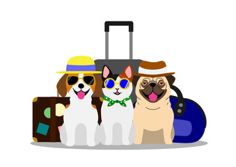 dogs and cat going to travel