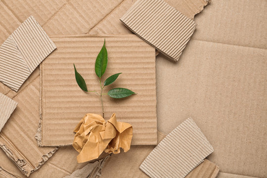 Green plant and crumpled paper on carton, top view with space for text