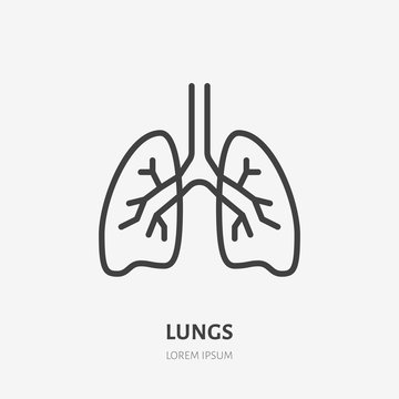 Lungs flat line icon. Vector thin pictogram of human internal organ, outline illustration for pulmonary clinic