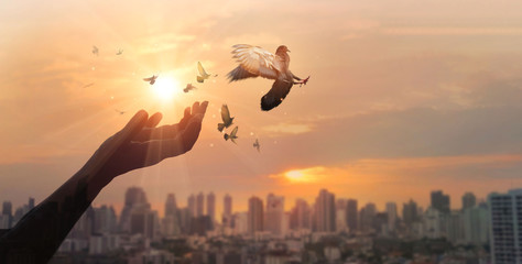 Fototapete - Hands of woman praying and free bird enjoying nature on city sunset background, hope concept.