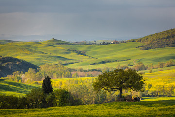 Foto op Canvas Meloen Fantastic sunny spring field in Italy, tuscany landscape morning foggy famous Cypress trees