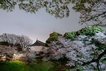 千鳥ヶ淵の夜桜 / Sakura at Chidorigafuchi