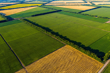 Aerial Flying Over corn, sunflowers, soybean and fields with straw bales Fotomurales