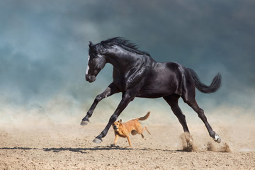 Beautiful bay horse with long mane run and play with dog in desert dust Wall mural