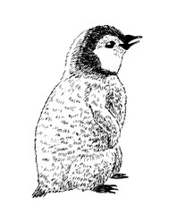 Penguin chick, hand drawn sketch. Vector illustration, isolated.