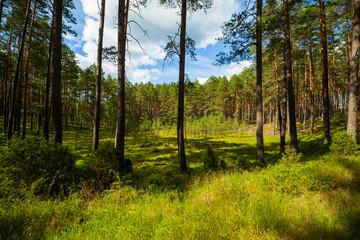 Las polana zielono lato wakacje