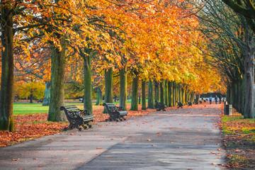 Tree lined autumn scene in Greenwich park, London