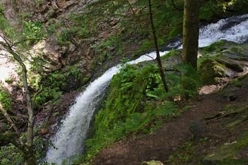 Spoed Fotobehang Bos rivier Wild waterfall in the Ravennaschlucht in summer