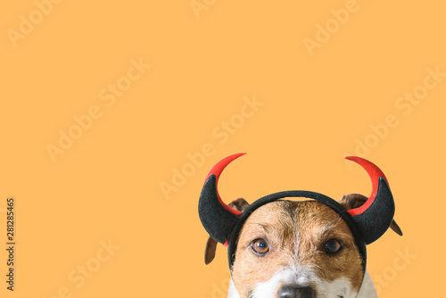 Dog wearing devilish horns as funny Halloween outfit