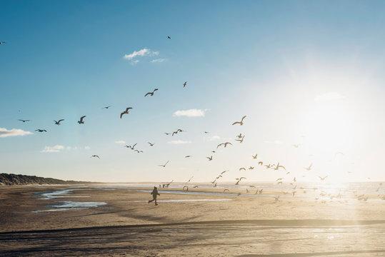 Denmark, Blokhus, boy chasing flock of seagulls on the beach