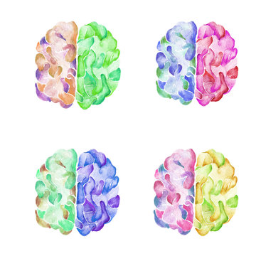 Set of watercolor illustration brain and development in four color options. Objects isolated on white background.
