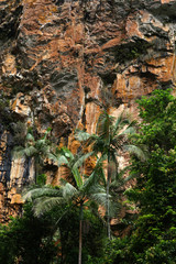 Foto auf Leinwand Fantasie-Landschaft Regenwald