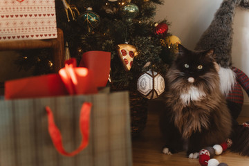 A mischievous cat sitting by the Christmas tree