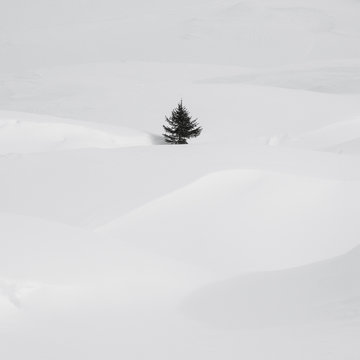 An isolate small pine tree in a snow drift.