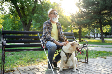 Blind mature man with guide dog sitting on bench in park Wall mural