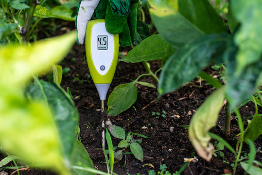 Moisture meter tester in soil. Measure soil for humidity with digital device. Woman farmer in a garden.