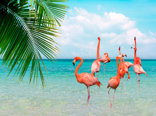 Aluminium Prints Flamingo Vintage and retro collage photo of flamingos standing in clear blue sea with sunny sky summer season with cloud and green coconut tree leaves in foreground.