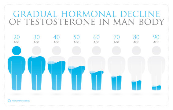 Vector Infographics of Changing Testosterone Levels in Men. Isolated on white background.