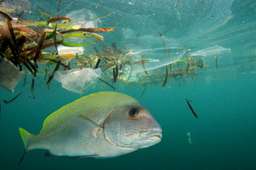 Plastic pollution in ocean and fish