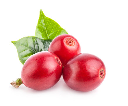 Red coffee beans isolated on white background with clipping path