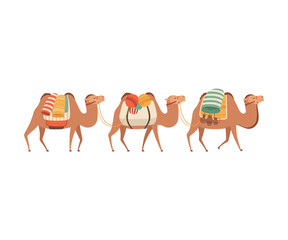 Caravan of Camels, Desert Animals Carrying Heavy Load, Side View Vector Illustration