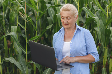 Female farmer in the field checking corn plants during a sunny summer day Wall mural