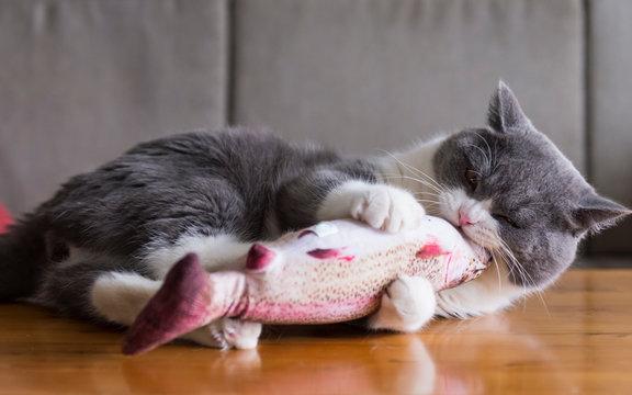 Kitten holding toy fish in bite