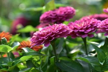 日本のイングリッシュガーデンの花壇の花