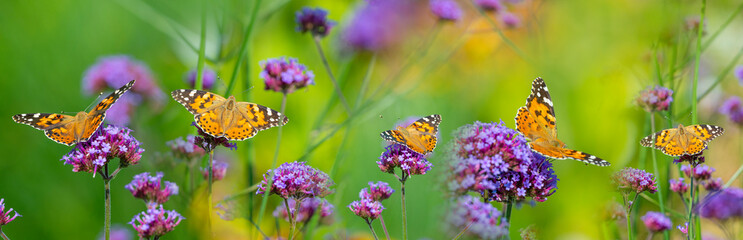 Foto op Canvas Tuin The panoramic view the garden flowers and butterflies Vanessa cardui