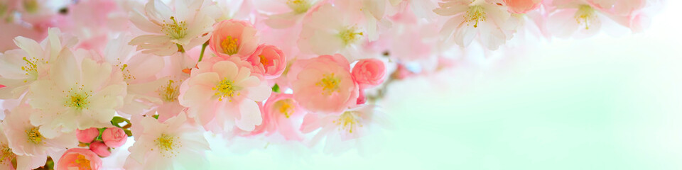 Papiers peints Fleuriste Sakura branch with flowers close-up in the panorama