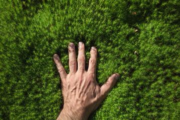 A man's hand touches a green forest moss.