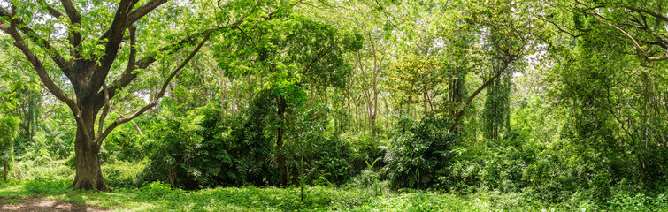 Panoramic Tropical rain forest jungle in Thailand