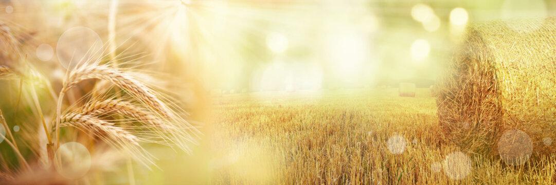 Rural harvest landscape.