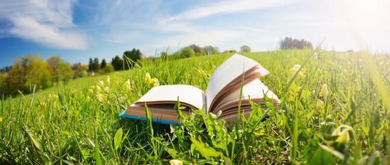 Fototapeta Open book in the grass on the field obraz