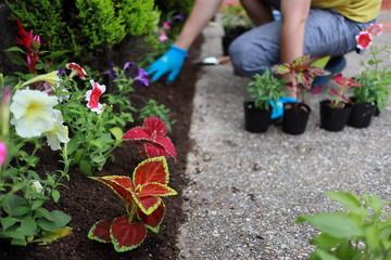 Aluminium Prints Garden ガーデニング 小さな花壇づくり